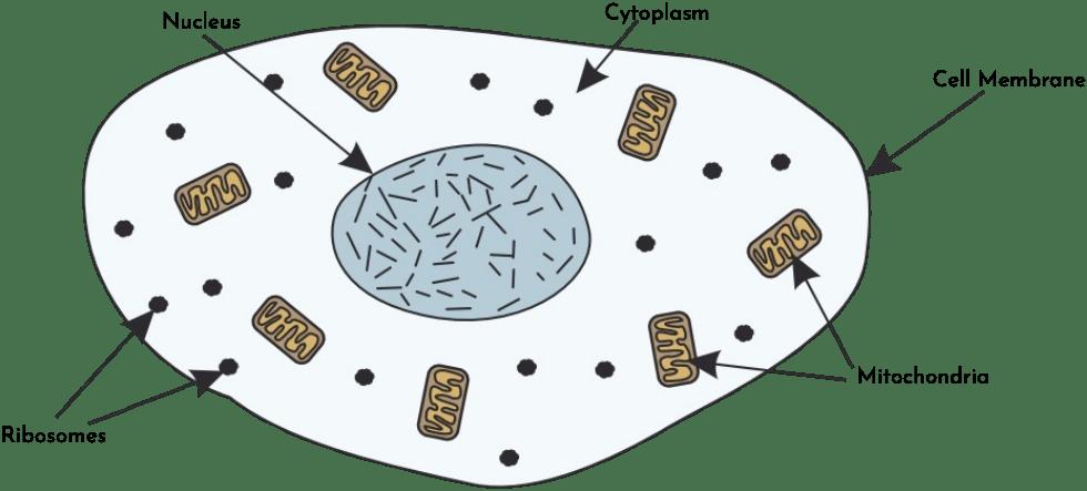Cells: Learn Biology - GCSE Learning Programme (GLP)